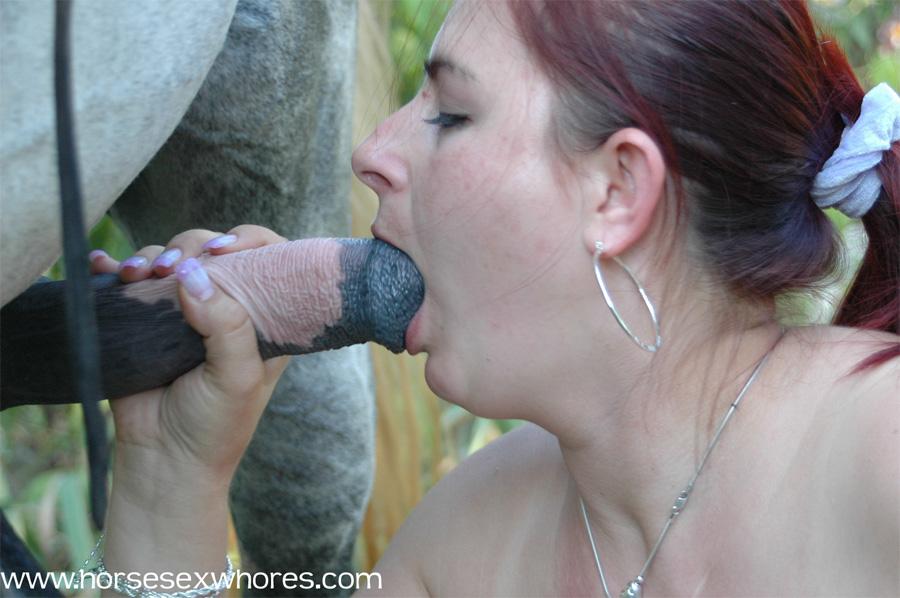 Sluts Sucking Horse Cock Xxx Porn Library | CLOUDY GIRL PICS