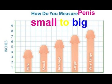 whats average pennis size